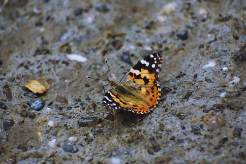 Brown Black and White Butterfly on Gray and Black Marble Surface