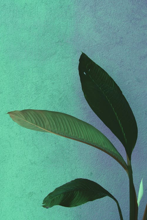 Základová fotografie zdarma na téma barva, čerstvý, rostlina