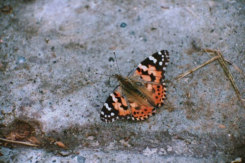 Black Orange and White Butterfly on Gray Surface