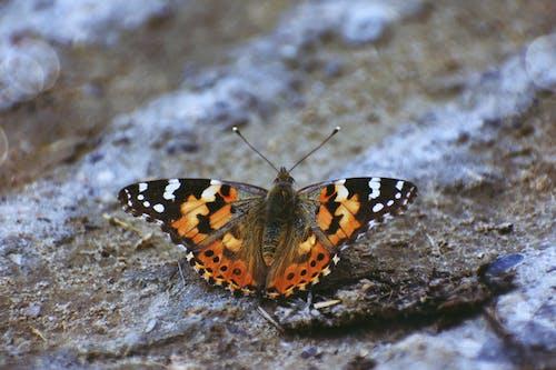 Foto profissional grátis de animal, antena, ao ar livre