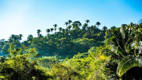 Fotos de stock gratuitas de arboles, bosque, cielo, jungla