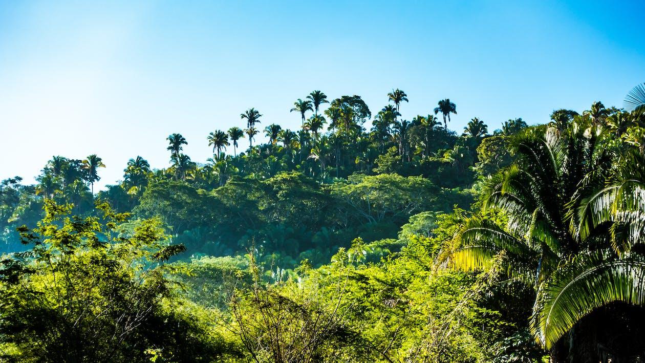 гора, деревья, джунгли