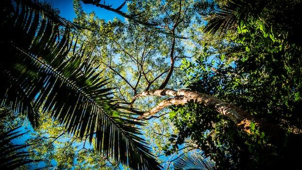 Kostenloses Stock Foto zu licht, natur, himmel, sommer