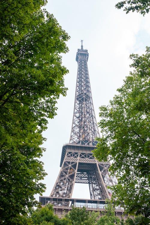 Foto profissional grátis de alto, arquitetura, árvores, construção