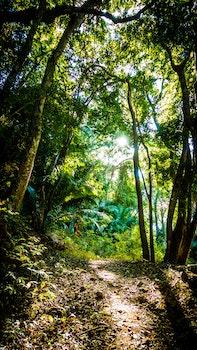 Free stock photo of road, landscape, nature, sun