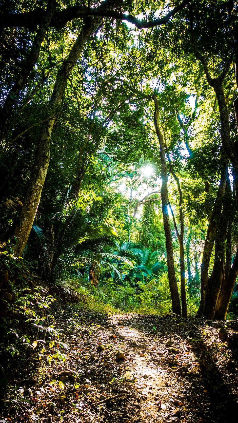 daylight, environment, foot path