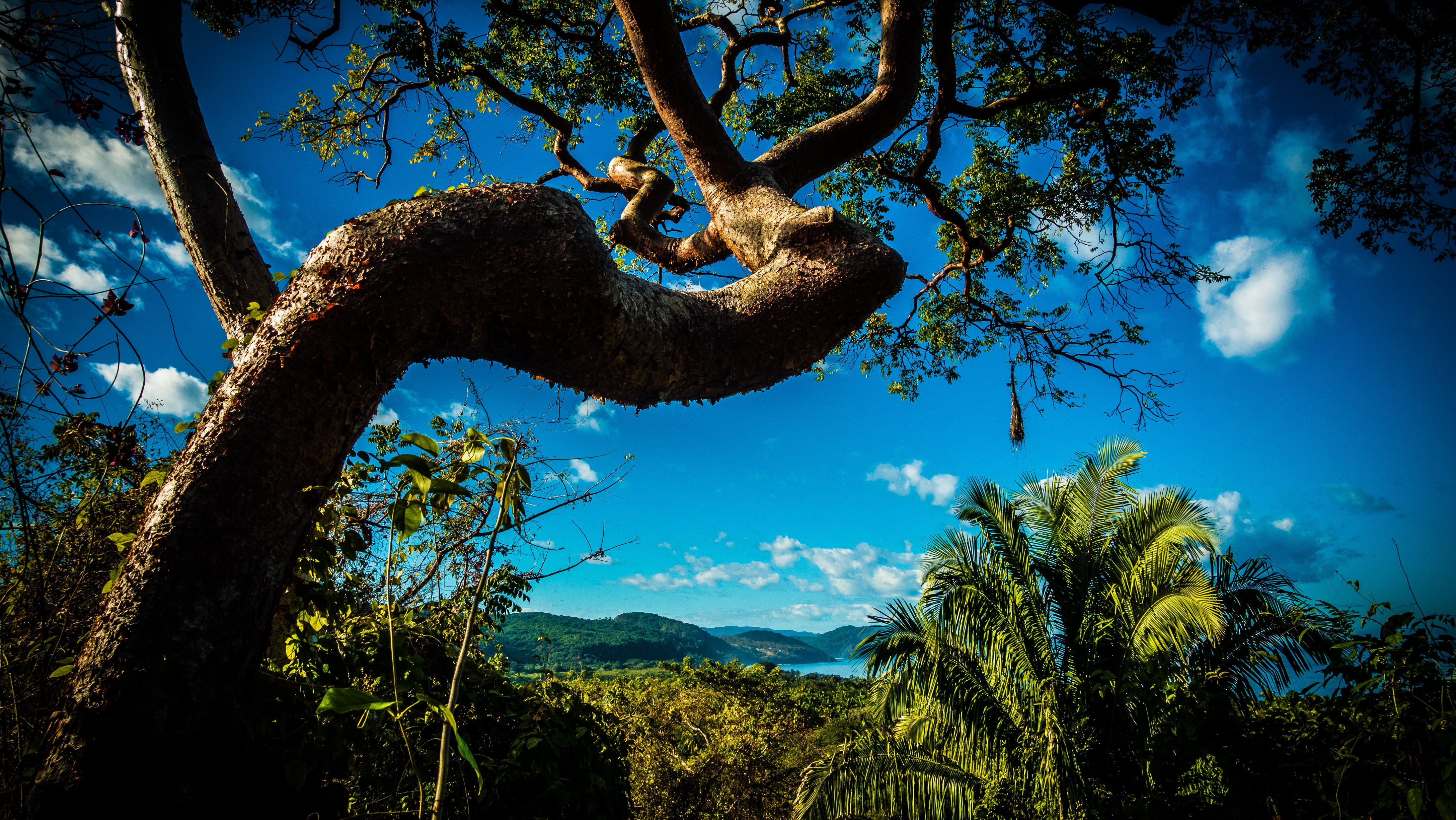 Free stock photo of clouds, forest, green, mexico