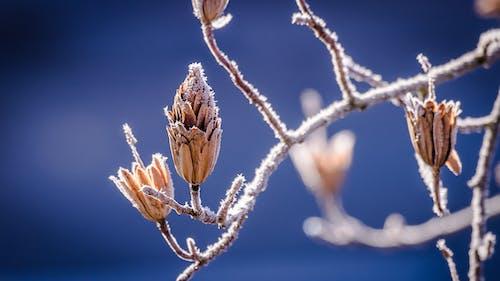 Kostnadsfri bild av frost, gren, isig, kall