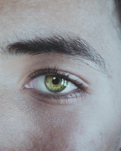 Безкоштовне стокове фото на тему «великий план, зелений, зеленуватий., око»