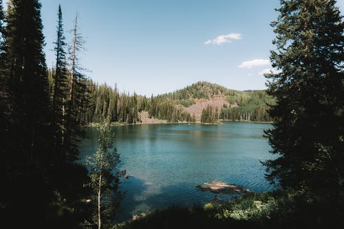 Kostenloses Stock Foto zu bäume, berg, colorado, draußen