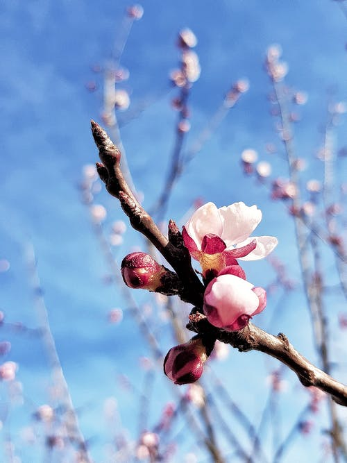 Free stock photo of beautiful flower, beautiful flowers, blue sky, life