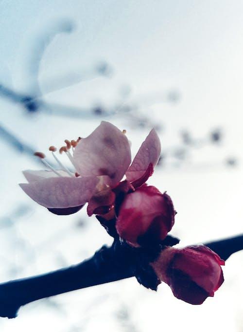 Free stock photo of art photo, artistic photography, beautiful flower, beautiful flowers