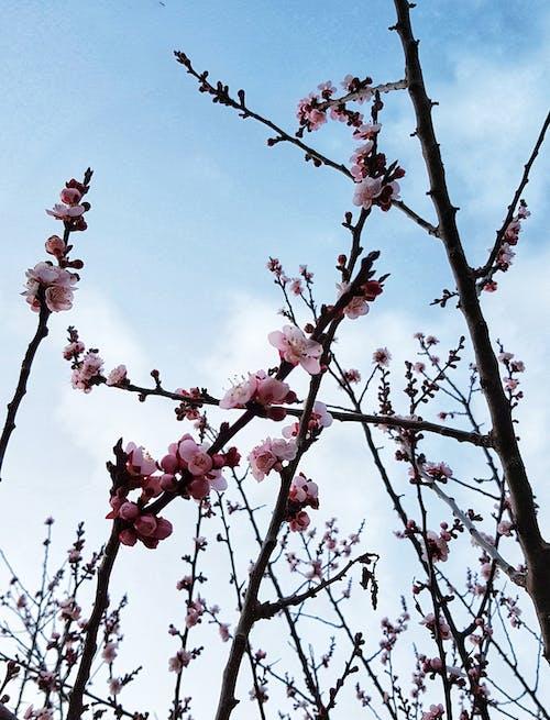 Free stock photo of beautiful, beautiful flowers, blue sky, flower