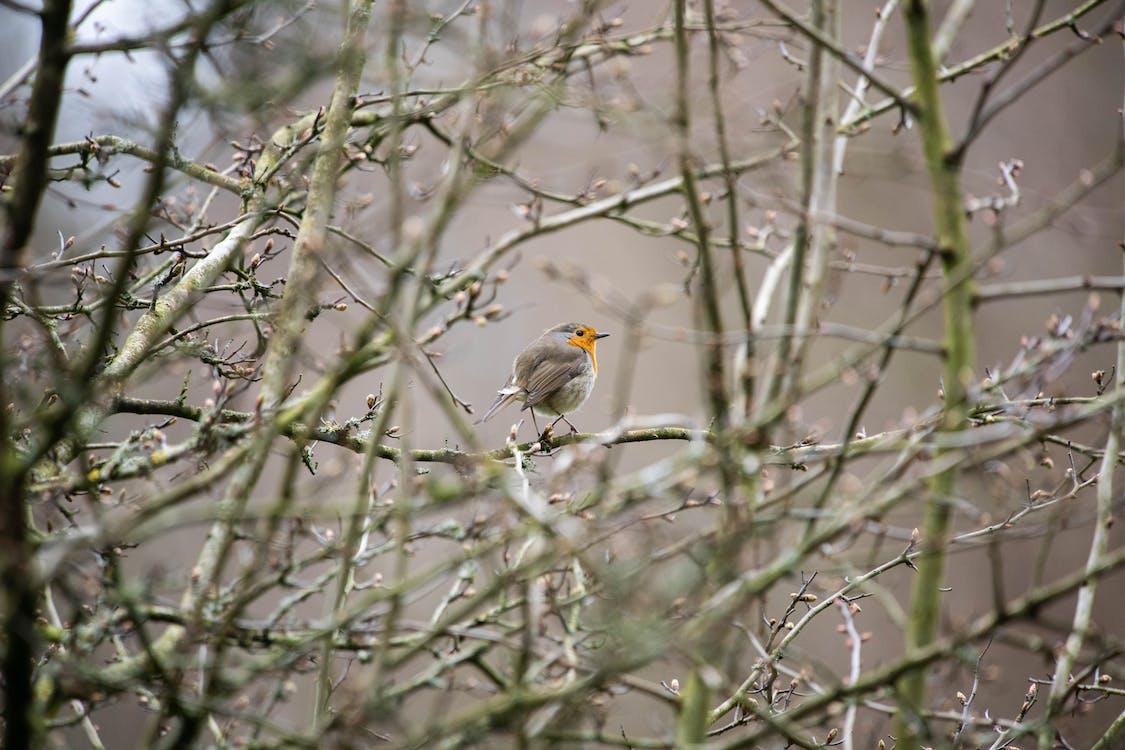 Brown and Orange Bird on Green Tree Branch