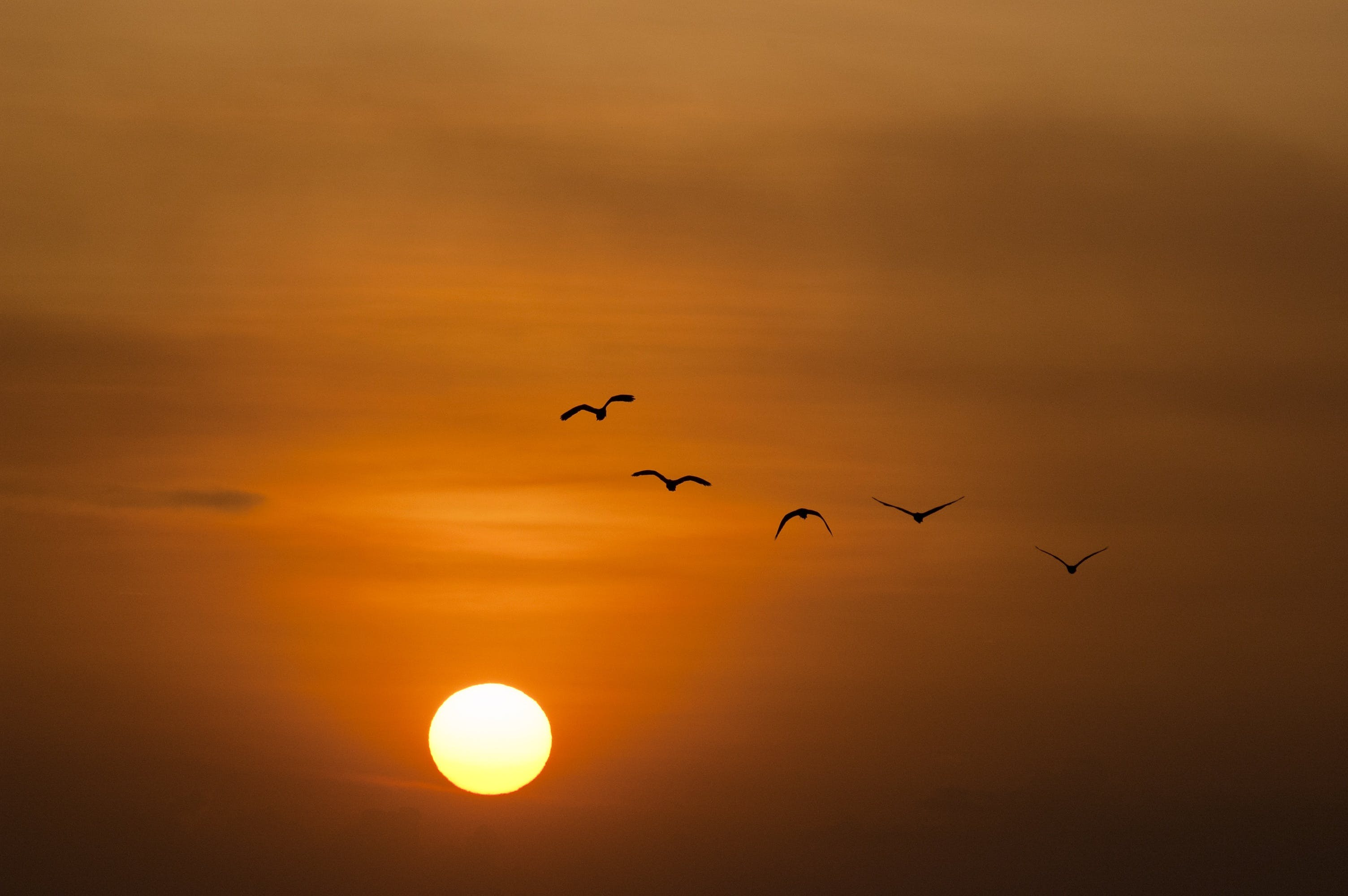 Birds Silhouette during Sunset