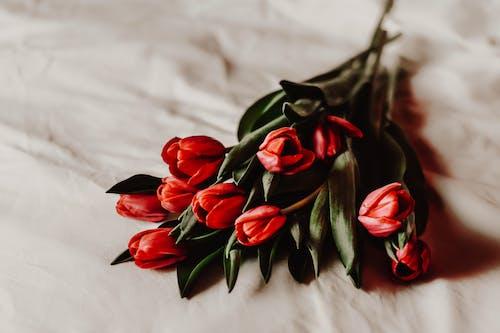 Gratis lagerfoto af accesorios de boda, blad, blomst, bryllup