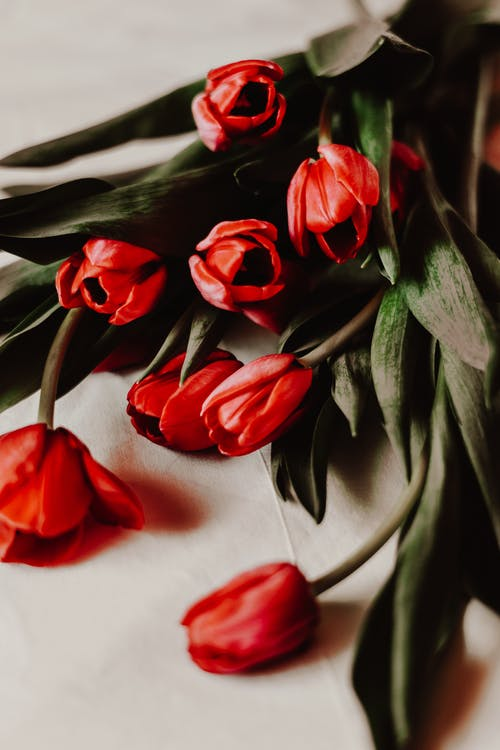 Red Tulips on White Textile