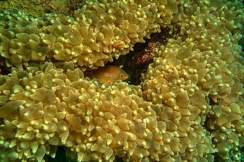 Fotos de stock gratuitas de acuario, agua salada, animal