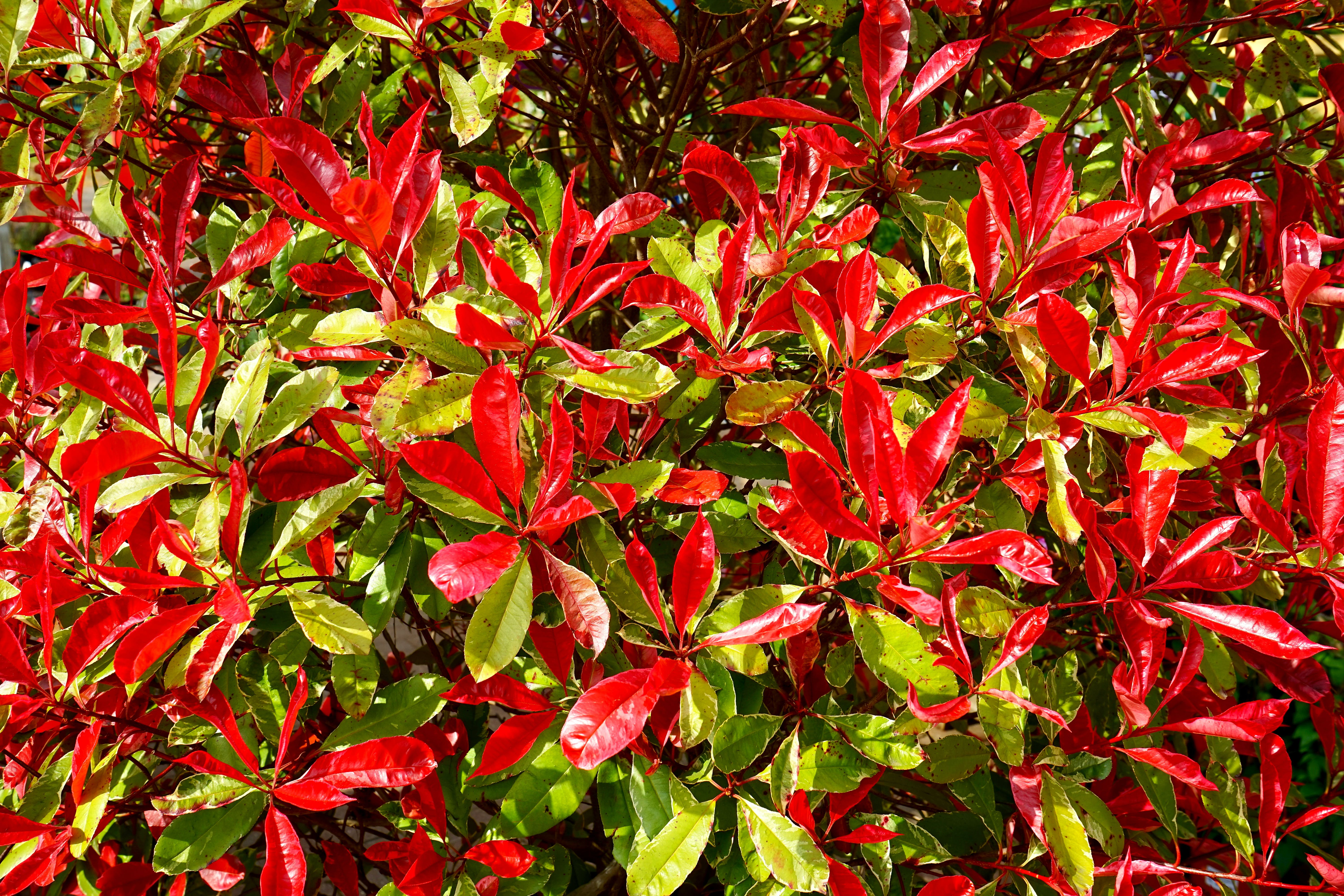 Photography of Red and Green Leaves