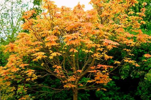 Ảnh lưu trữ miễn phí về ánh sáng ban ngày, bình dị, cây, danh lam thắng cảnh