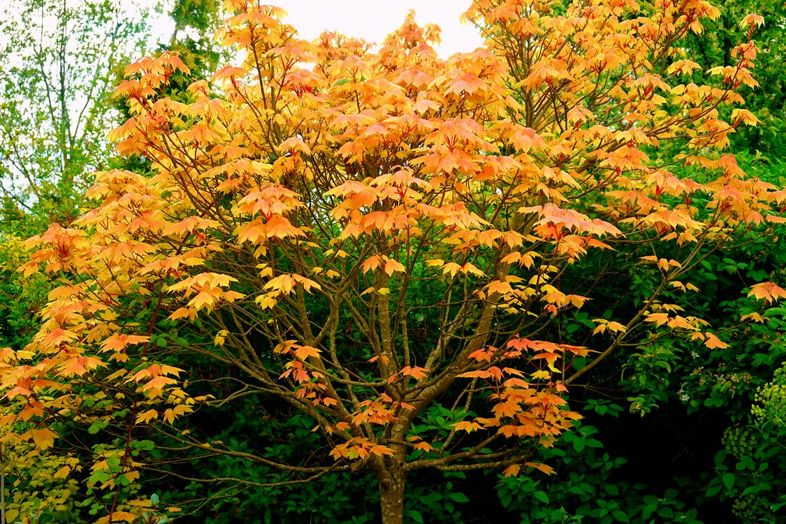 alberi, boschi, foglie autunnali