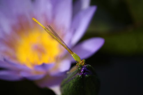 Free stock photo of 4k wallpaper, dragonflies, dragonfly