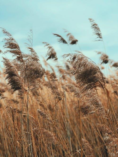 Foto profissional grátis de área, bambu, campo, campo de trigo