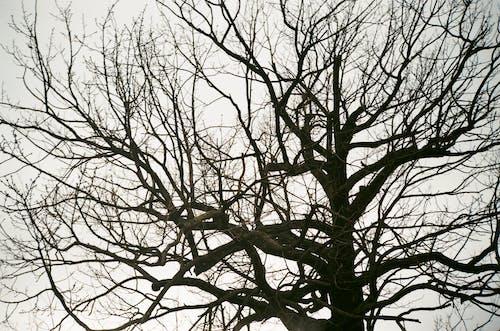 # 35mm의 무료 스톡 사진