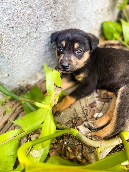 Free stock photo of #animals, #dog, #mobilechallenge, #outdoorchallenge