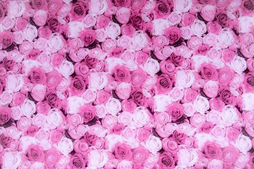 Бесплатное стоковое фото с декорация, лепестки, обои роз