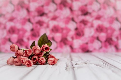 Pink Roses On White Surface