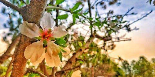 봄, 아름다운 꽃의 무료 스톡 사진