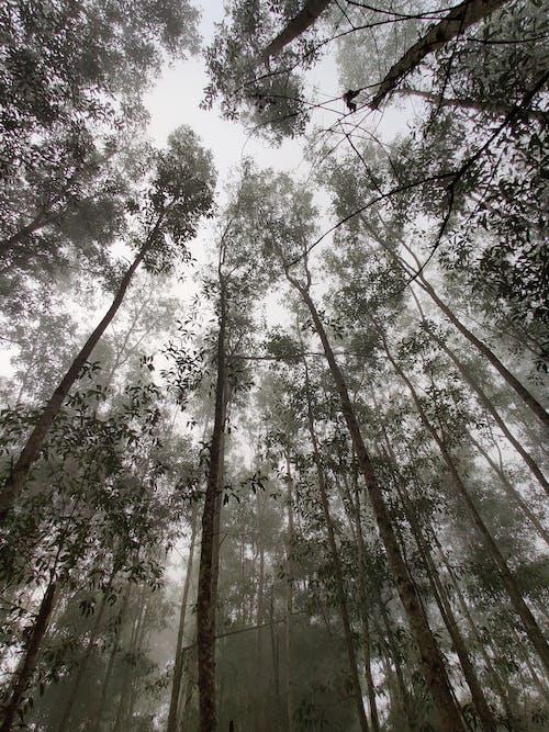 Kostenloses Stock Foto zu äste, aufnahme von unten, bäume, baumrinde