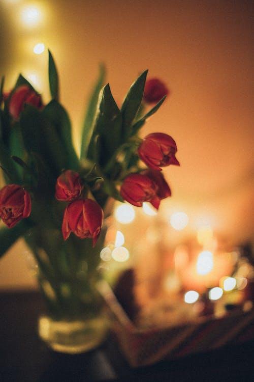 Red Tulip in Tilt Shift Lens