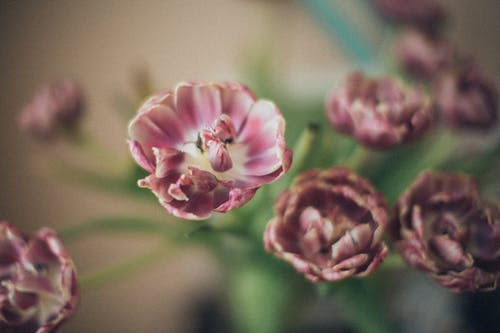 Ảnh lưu trữ miễn phí về bó hoa, cắm hoa, cánh hoa, cuộc sống tĩnh lặng