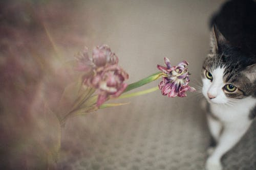 Cat Staring the Flower