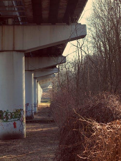 Imagine de stoc gratuită din acoperirea podurilor, beton, podul de frunze, urban