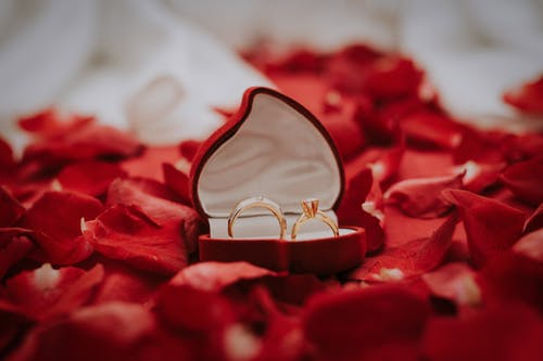 Gold Wedding Bands in Case on Red Rose Petals
