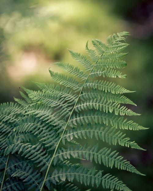 Ilmainen kuvapankkikuva tunnisteilla bokeh, ekologia, eksoottinen, kasvi