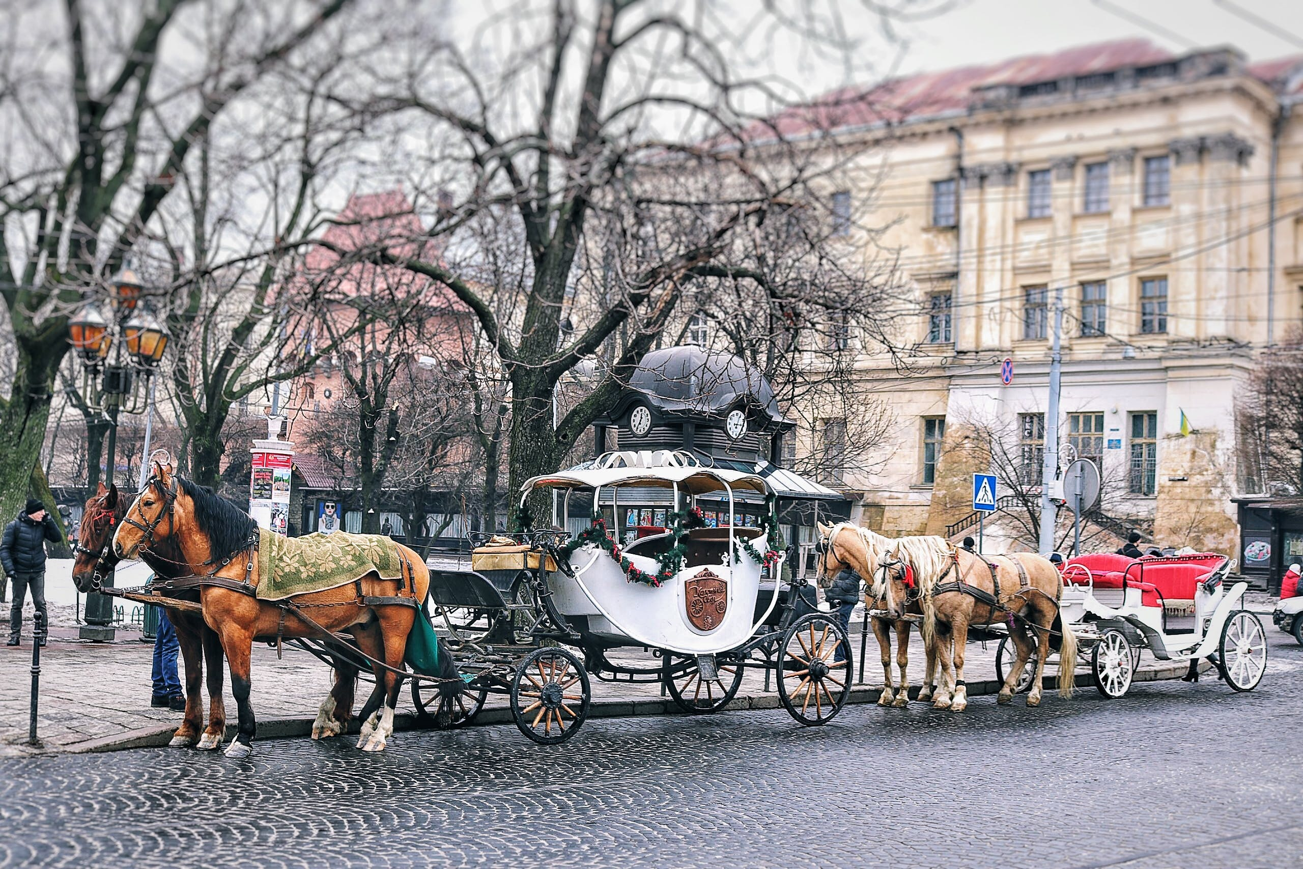 Brown Horses With Carriage Near Building