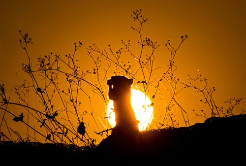 Silhouette of Rodent during Sunset