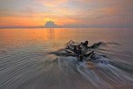 wood, sea, dawn