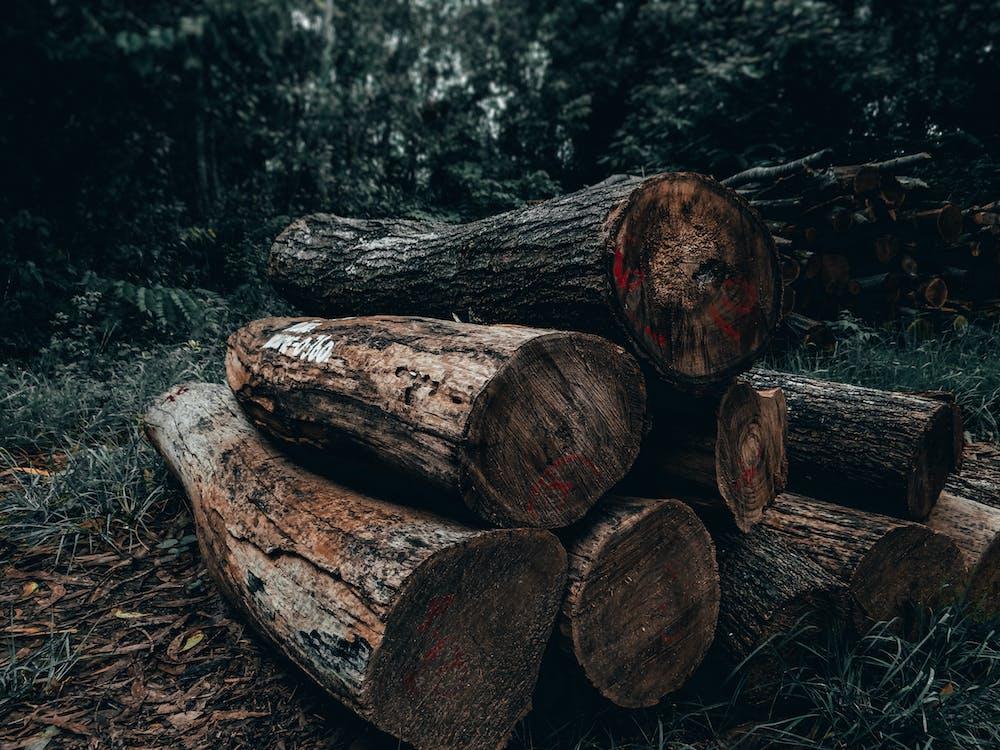 Zdjęcie Brown Wood Logs