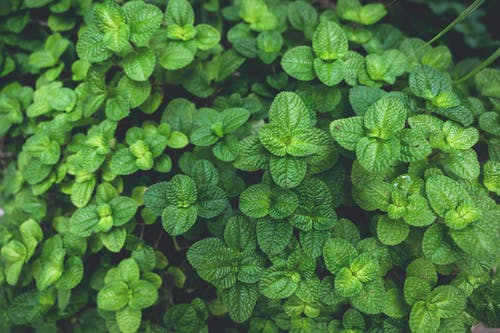Green Leafed Plant In Close Up Photography