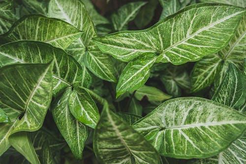 Foto stok gratis Daun-daun, dedaunan, hijau, kebun