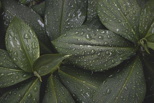 Бесплатное стоковое фото с завод, зеленый, капли дождя