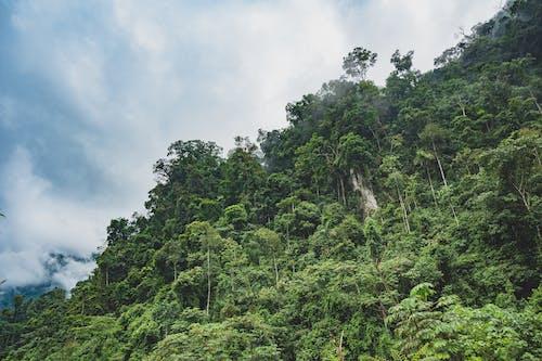 Fotobanka sbezplatnými fotkami na tému dažďový prales, džungľa, exteriéry, lesy