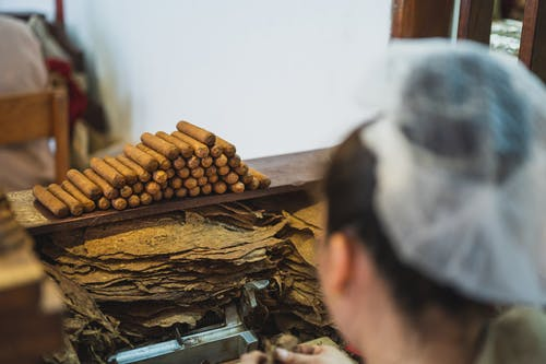From above back view of crop anonymous female employee in transparent cap preparing tobacco near stack of cigars in fabric