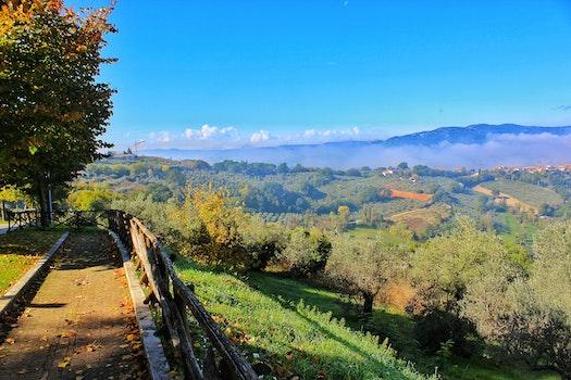 Free stock photo of Toscana, fiori, gree, umbria