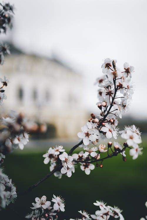 คลังภาพถ่ายฟรี ของ ความชัดลึก, ดอกไม้, พฤกษา, ละเอียดอ่อน